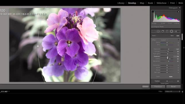 How to Blur Background Using Lightroom: Your Ultimate 2020 Guide