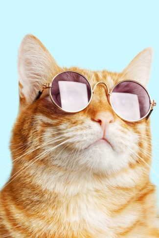 A cool and adorable wallpaper of a cat with round, purple sunglasses.