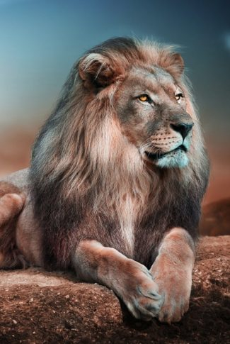 Strong and Amazing King of the Jungle