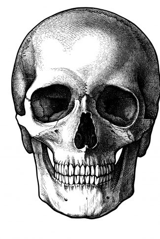 Download Black And White Skull Wallpaper Cellularnews