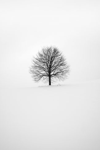 Black And White Tree Wallpaper