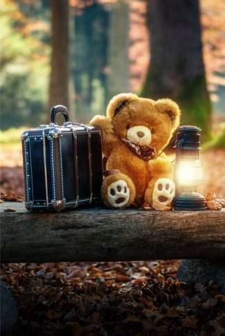 Download Camping Teddy Bear Wallpaper Cellularnews
