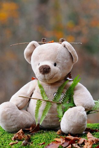 A jungle teddy bear was living there a very long time.