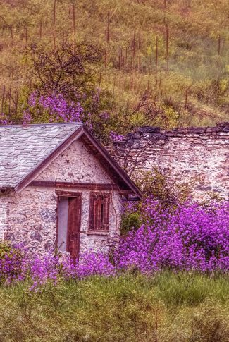 This purple house is living in a rural and quiet life in the country side.