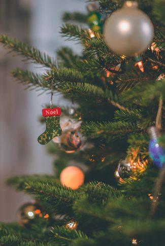 santa socks on christmas pine trees