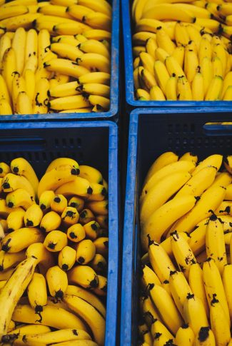 This image is full of bunch fresh new harvest bananas.