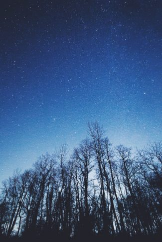Download Trees Under A Starry Sky Wallpaper Cellularnews