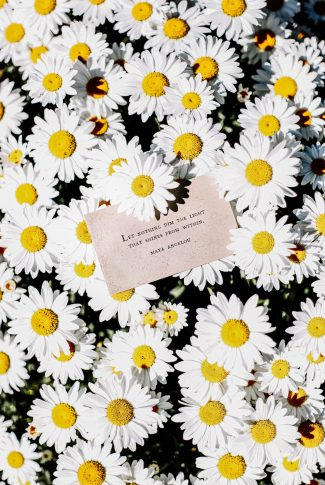 Hope is not something you get from anyone, you get it from yourself. In that way, no one can take it away from you. A motivational quote wallpaper typed on a paper and placed on a bed of flowers.