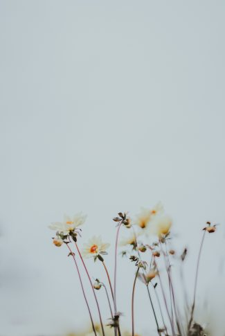 Download White Flowers Aesthetic Wallpaper Cellularnews Search free soft aesthetic wallpapers on zedge and personalize your phone to suit you. white flowers aesthetic wallpaper