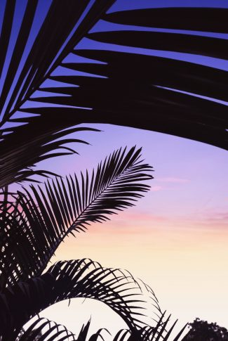 An aesthetic summer wallpaper of a colorful sky with silhouettes of tree leaves.
