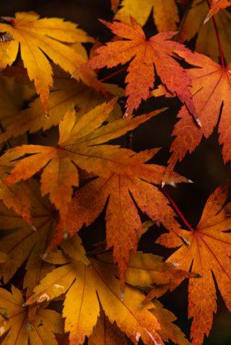 44 aesthetic autumn leaves