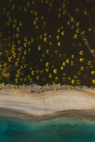 A beautiful wallpaper of the beach and a forest of trees from a bird's-eye view.