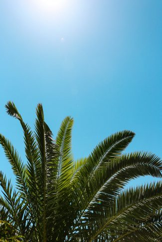 An aesthetic wallpaper of a Palm tree on a clear, blue sky.