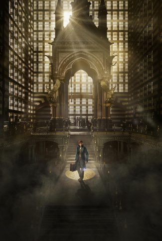 Download Fantastic Beasts And Where To Find Them Newt At The Macusa Wallpaper Cellularnews
