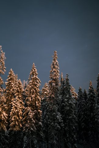 Download Winter Wallpaper Snow Covered Trees Cellularnews If you have your own one, just send us the image and. download winter wallpaper snow covered