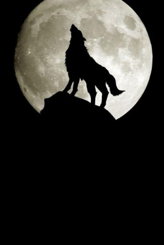 Download Moon Wallpaper A Howling Wolf Cellularnews