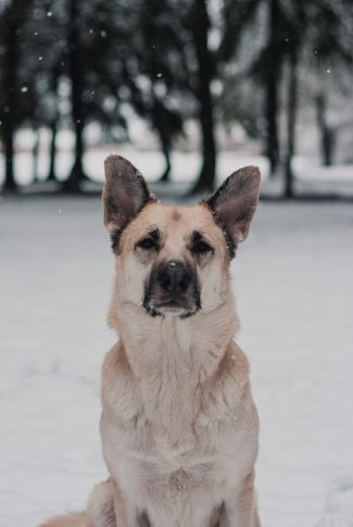 An adorable winter wallpaper of a dog with snow falling around.
