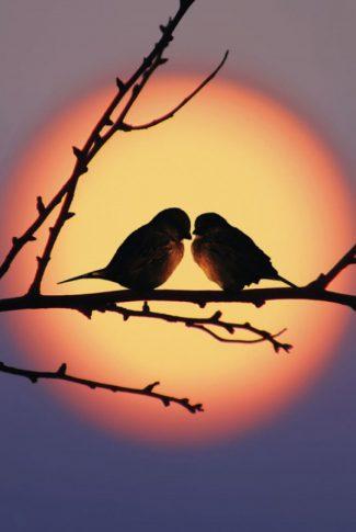 Download Sun Wallpaper Lovebirds Cellularnews